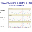 PIK3CA mutations in gastric models